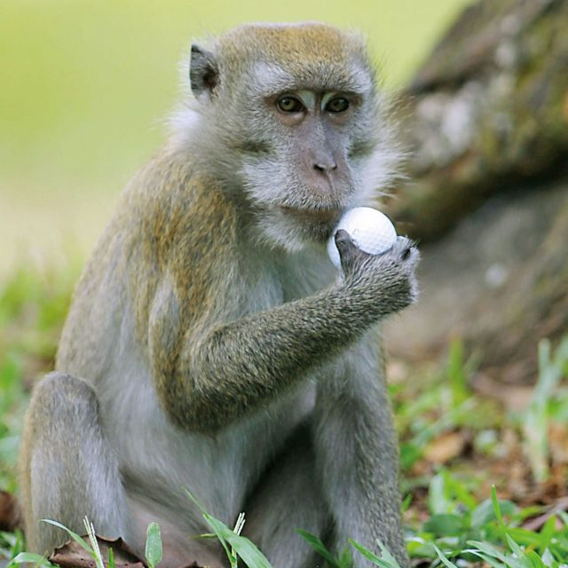 How to Properly Treat a Monkey Bite