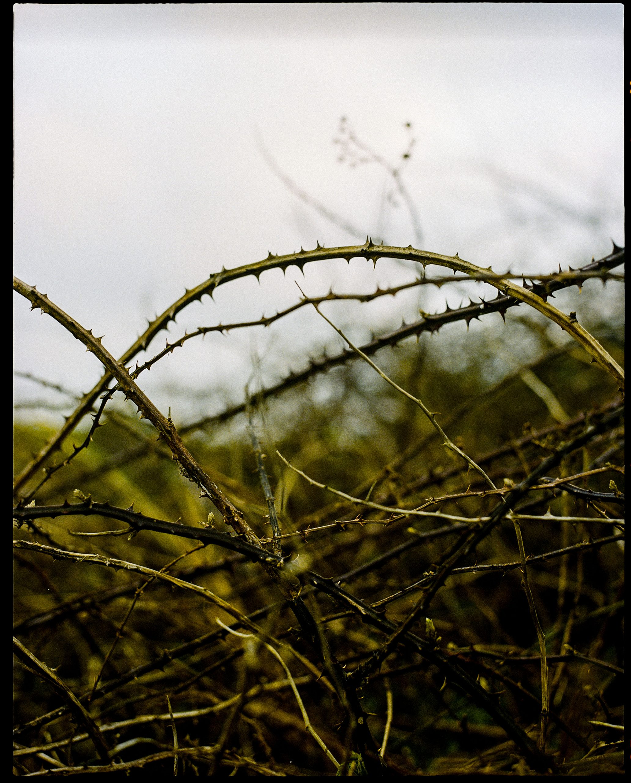 Thorns at Muirfield
