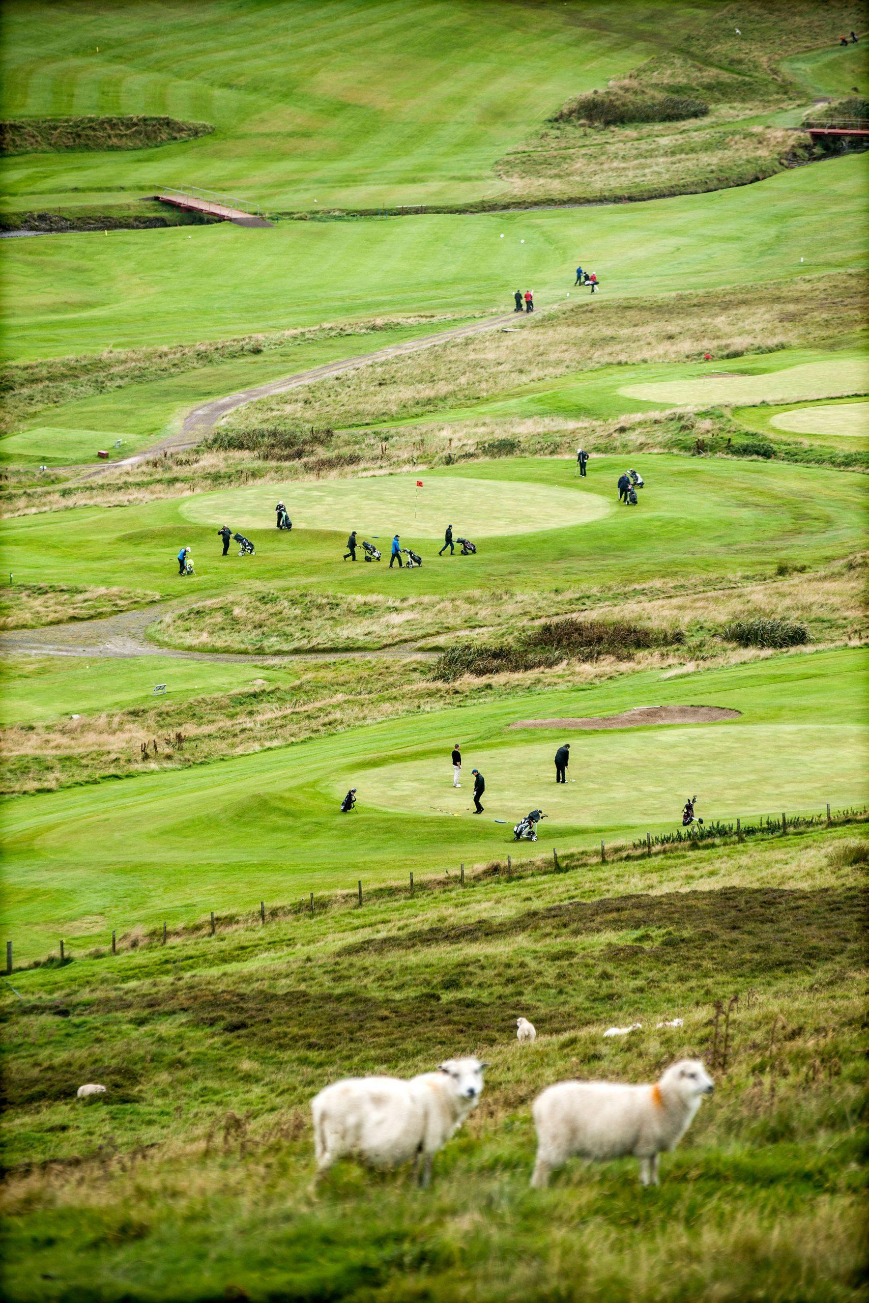 Sheep graze near the Shetland Golf Club in Burn of Dale, a few miles west from Lerwick capital of Shetland. Photo by Xavier Cervera/Panos.