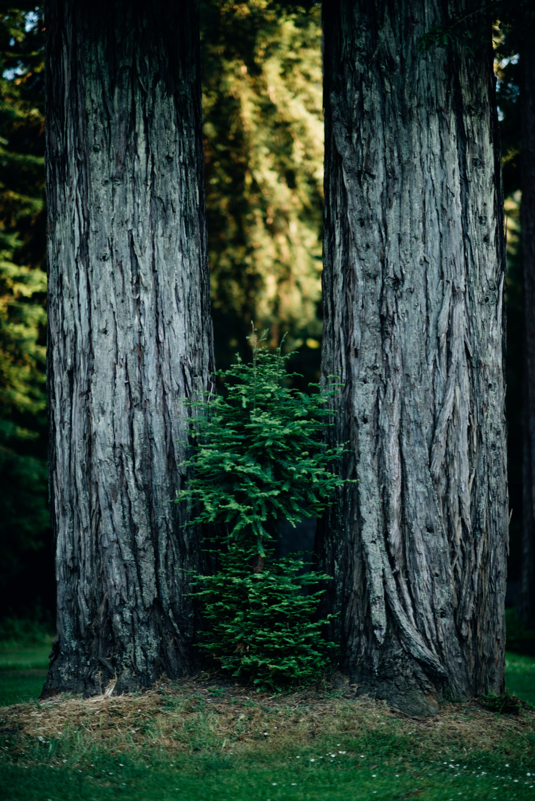 Two Tall Tales. Photo by Kohjiro Kinno