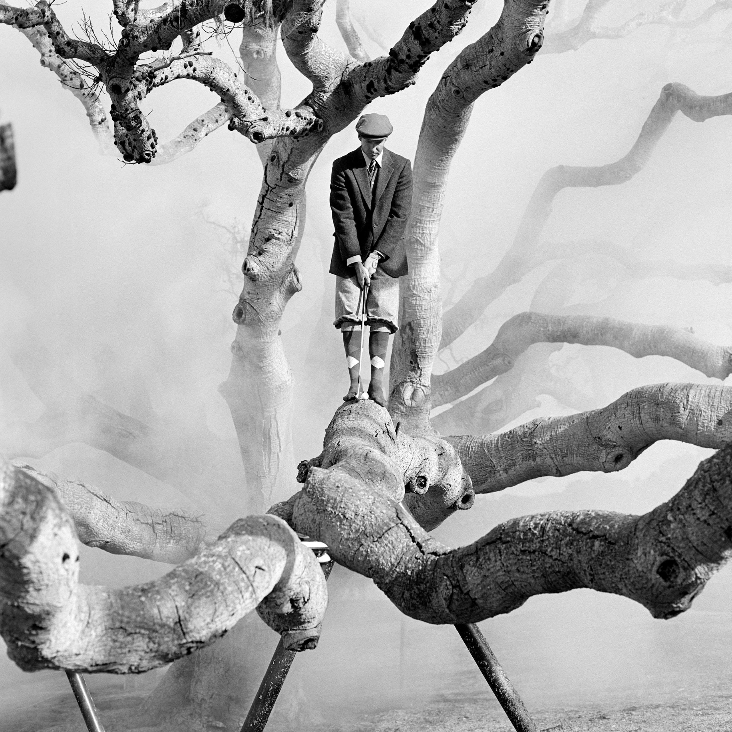 oak tree, Pebble Beach, 1998