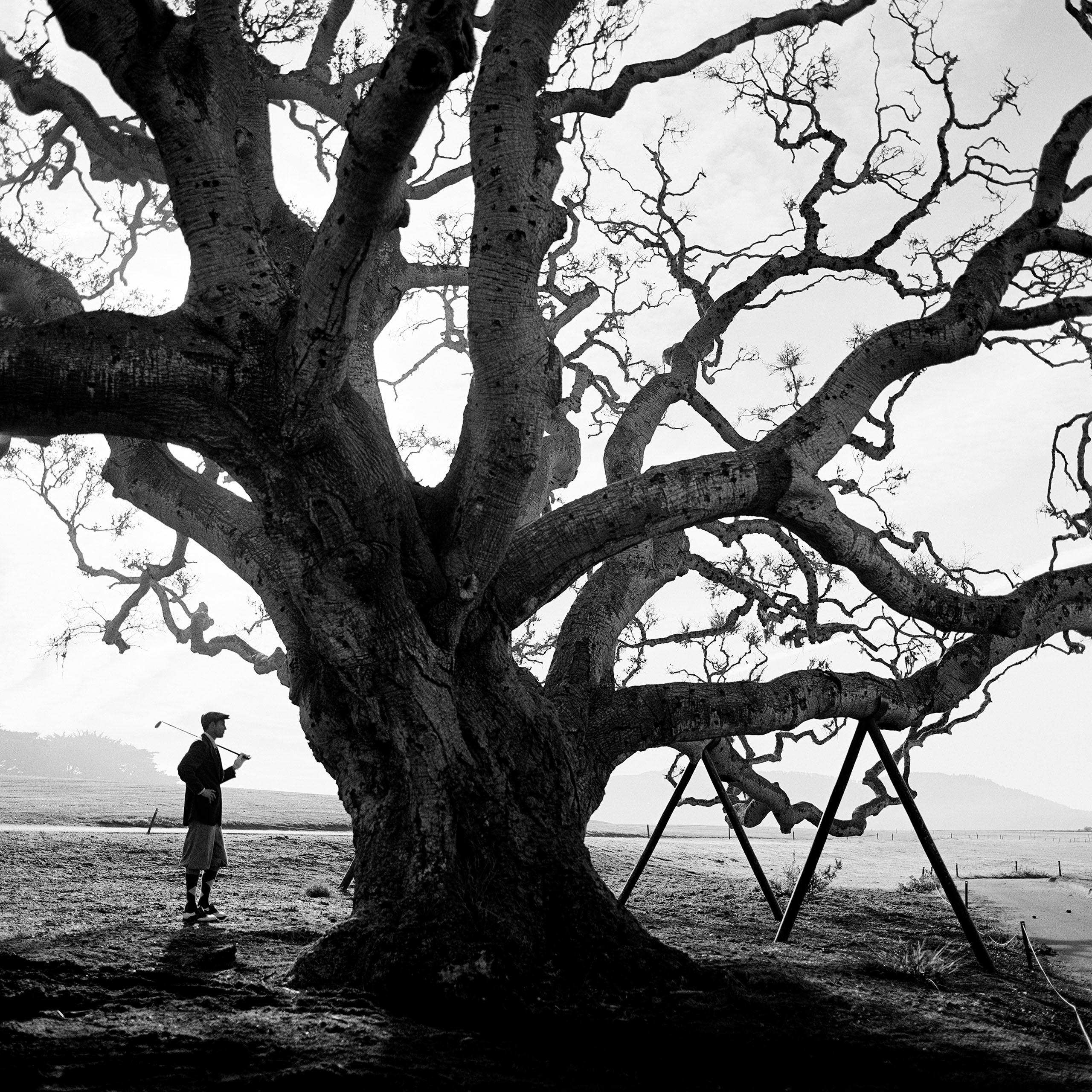 Pebble Beach tree, 1998
