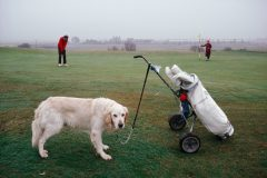 A Faithful Companion Can't Bear To Look At This Putt During A Ladies' Match At Rye Golf Club In East Sussex, England, In 1989. Photo by Martin Parr.