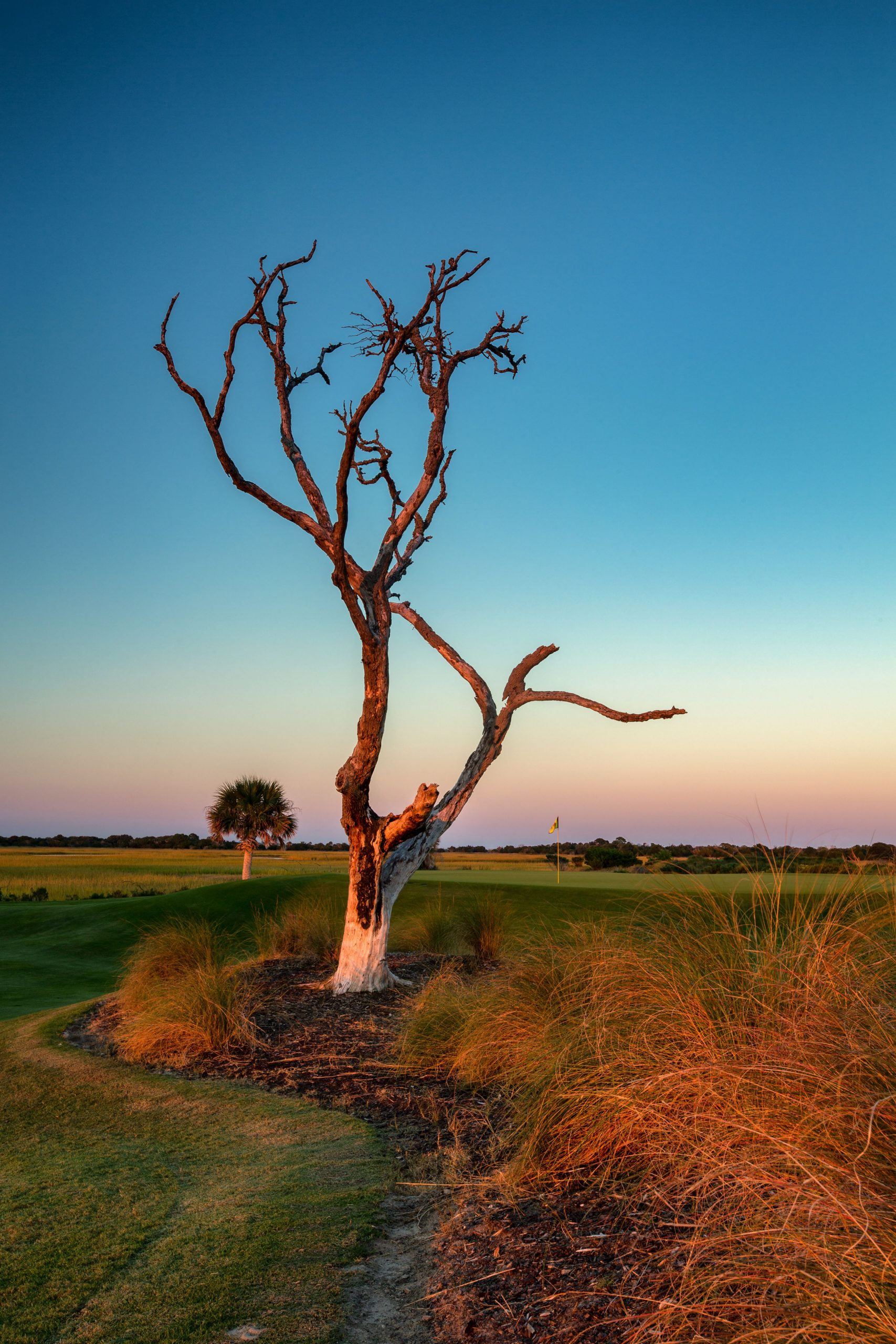 Nature always has an unpredictable effect on major championships, but in 2012 what was already in the ground, not in the forecast, got people talking. The lone live oak tree was a small part of the hole, but Rory McIlroy's aggressive drive managed to crash-land in its branches. Photo: Jim Reitz