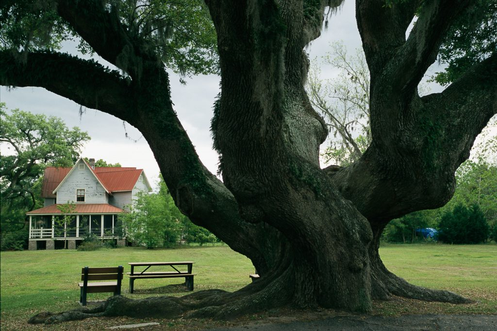 Benches under a live oak tree on the grounds of an old farm house. Photo by Raymond Gehman/National Geographic Creative