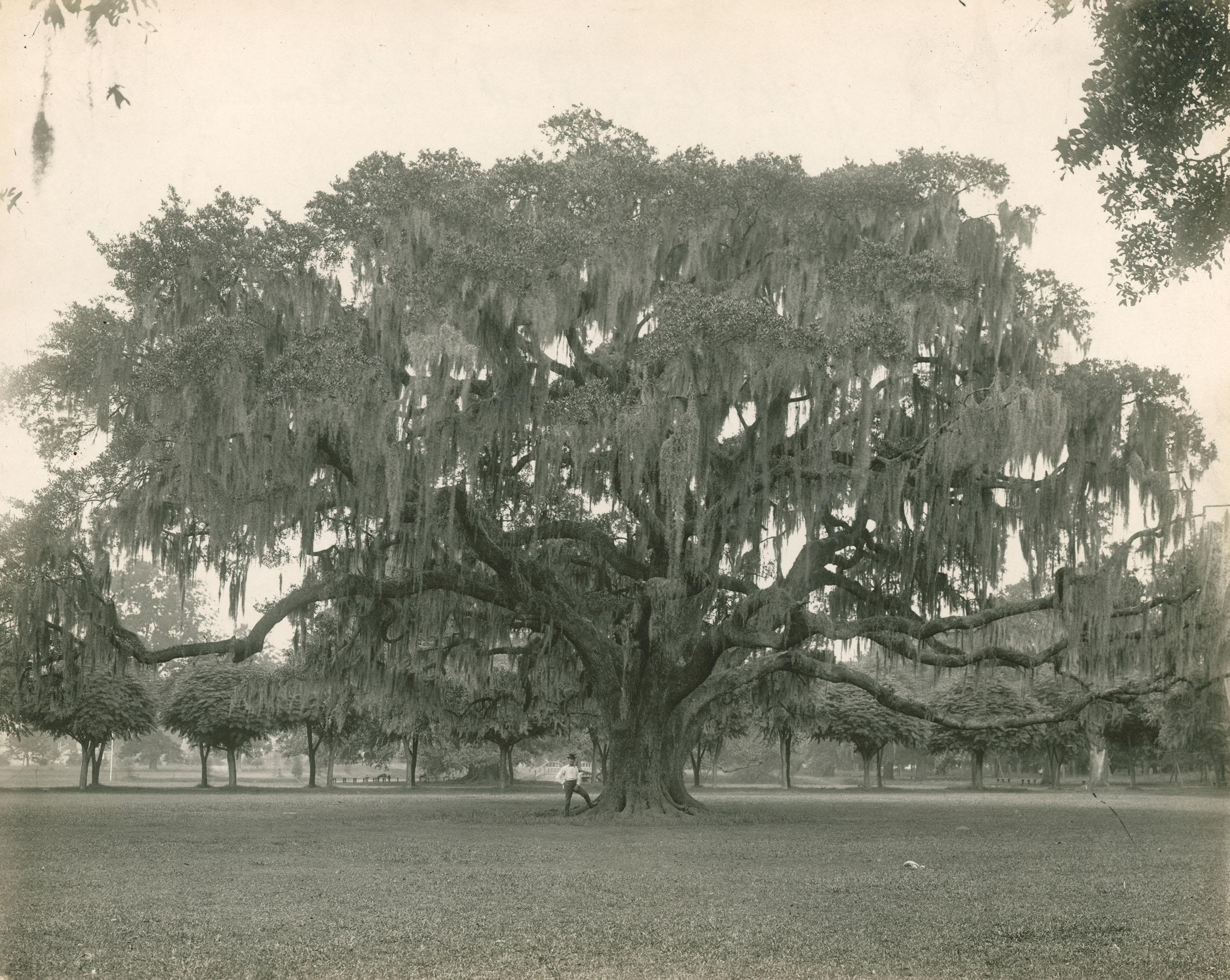 According to Coleen Landry, the chairwoman of the Live Oak Society, each tree has its own unique personality, including being either masculine or feminine. Their fierce individualism and long life-spans have endeared them to Southern culture, where they still occupy a special place. For the record, Landry confirms that Rory's Oak was masculine. Photo by: Alexander/National Geographic Creative