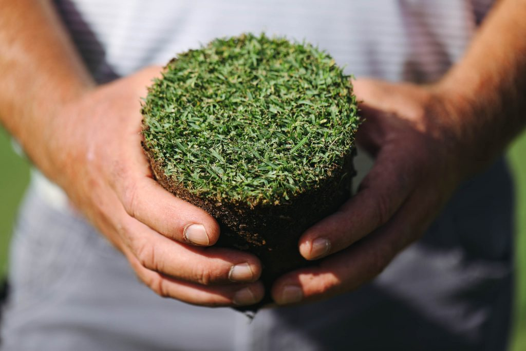 Paspalum has gone from African shores to slave ships to lining fairways on Kiawah Island and in Dubai and Vietnam.